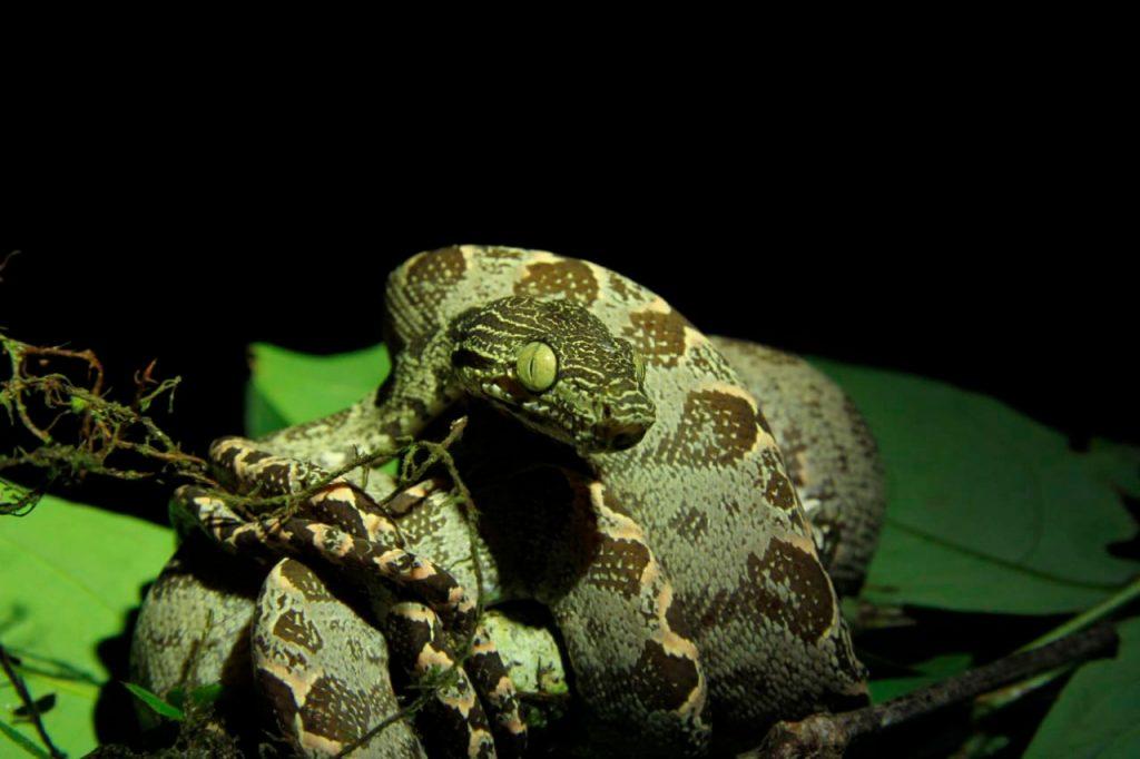 Fauna que embellece la reserva del Cuyabeno